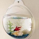 hangingfishbowl